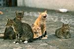 Palermo, la carica dei 372 mici: salvati e ora accuditi al «gattile»