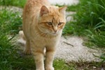 """Gatto pestato in un video su Youtube """"Gli autori giovani di Francofonte"""""""
