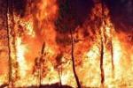 Incendi, a Castellammare del Golfo le fiamme minacciano alcune case