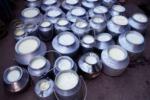 Il presidente della coop «Ragusa latte», Giovanni Schembari: «Vogliamo impegni concreti dagli industriali» Il prezzo del latte allarma i produttori «Le nostre aziende a rischio chiusura»