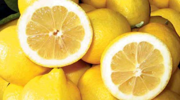 limone igp, limone igp siracusa, Siracusa, Economia