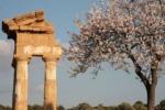Sagra del Mandorlo in fiore, gruppo della Georgia vince il Tempio d'oro