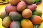 Una ricerca sui frutti tropicali «I migliori sono quelli siciliani»