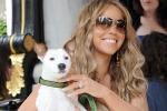 Viaggi in prima classe e trattamenti di bellezza Mariah Carey e la vita lussuosa dei suoi 8 cani