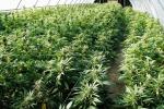 Vittoria, serra di marijuana in casa: un arresto