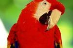 Sempre più pappagalli in casa Socievoli, intelligenti e colorati