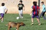 Palermo, cani senza museruola al parco Cassarà: è allarme