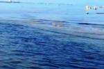 Rottura sulla linea P2 a Porto Isola Sversati in mare 400 litri di greggio