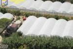 Sequestro di marijuana ad Acate, ecco le benemerenze civiche