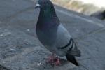 Enna, spara contro i piccioni ma colpisce la casa del vicino