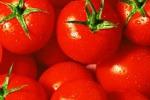 """""""Boicottate il pomodoro di Pachino"""": scoppia la polemica"""