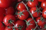 Pachino, nel futuro del pomodorino c'è l'Asia: accordo col Giappone