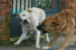 Troppe aggressioni di cani randagi: ora la gente non nasconde la paura