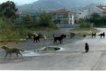 Castelvetrano, la Forestale per catturare i cani randagi