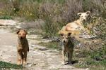 Randagismo a Sciacca, accalappiacani nei lidi: venti animali catturati in due mesi