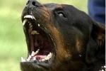 Piazza Armerina, bimba aggredita da un cane