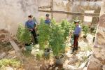 Coltivazione di marijuana a San Cipirello: due arresti