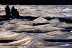 Il vento sradica copertura delle serre: danni ingenti per i produttori a Licata