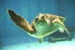 Siracusa, aperte 63 uova della tartaruga Caretta caretta