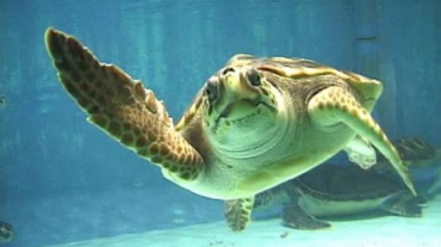 pronto soccorso tartarughe filicudi, Messina, Società