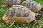 Ficuzza, casa delle tartarughe: così si salvano le specie in pericolo
