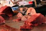 Milano, sequestrato tonno rosso proveniente dalla Sicilia