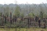 Tornado negli Usa, decine di morti