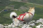 In montagna con il cane Dog trekking anche in Sicilia