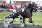 Cavallo morto in strada, il proprietario: è figlio di Varenne