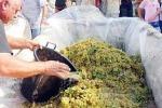 A Scopello i colori e i sapori del vino: nella piazza del borgo si vendemmia