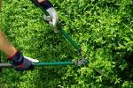 Il verde pubblico in... «adozione» Un'iniziativa che ottiene consensi a Enna