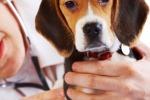 Soccorso stradale per cani e gatti In Sicilia le ambulanze veterinarie