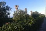 Ragusa, «La villetta di Marina inagibile e indecente»