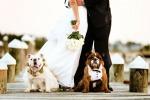 «Wedding Dog», è boom: sposi accompagnati da Fido