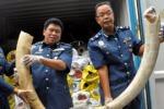 Sequestrate zanne di elefante per 50mila euro a Siracusa