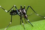 Invasione di zanzare ad Enna, parte disinfestazione per bloccare aumento