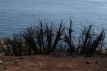 Lo Zingaro rinasce e la natura vince sulla burocrazia